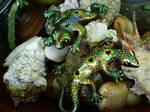 Katak and Cicak by LuthienThye