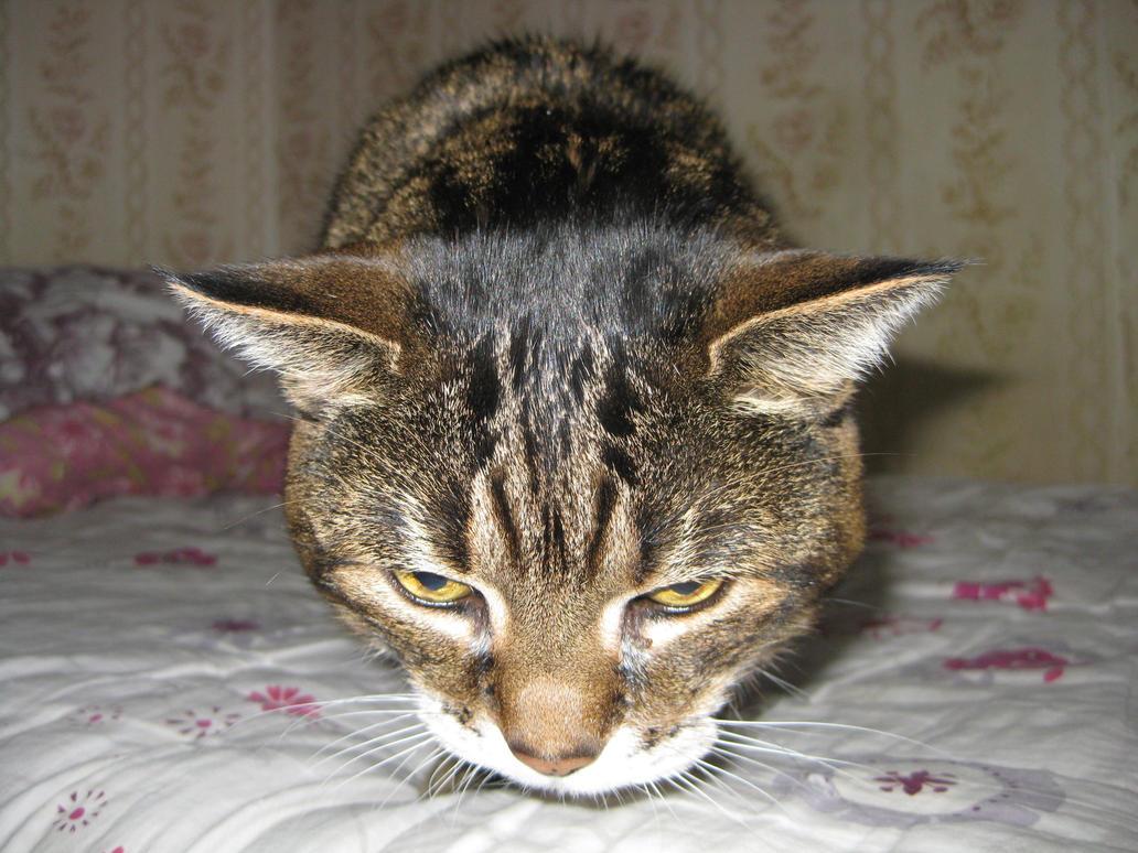 cat yarn ball