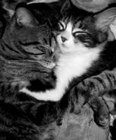 Cats cute by Bonnie-no-uta