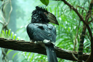 The Hornbill by Kata