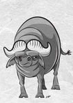 Water Buffalo by Kata
