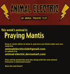 Praying Mantis by Kata