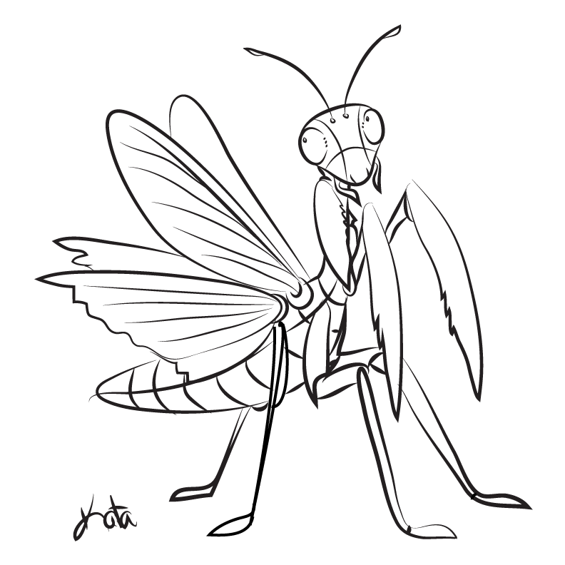Praying mantis sketch by kata on deviantart for Praying mantis coloring page