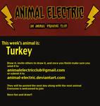 Turkey by Kata
