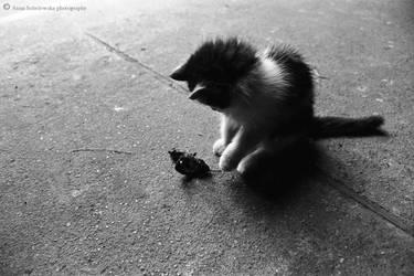 Kitten by Caramiela