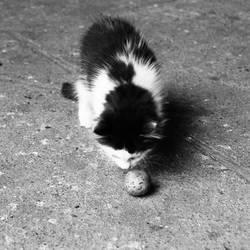 Kitty by Caramiela