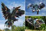 Kookaburra 2
