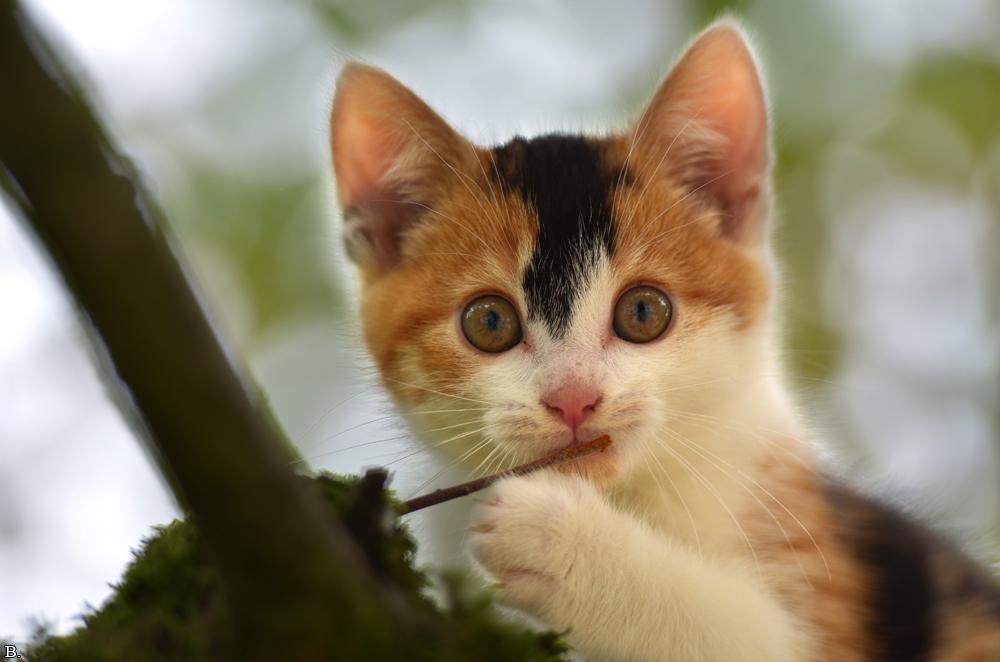 Miau? by Wincey