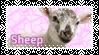 Sheep by KiwiNiorin
