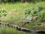 The forlorn bench