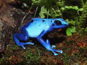 froggy by soulkissfaerie