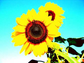 sunflower by soulkissfaerie