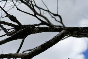 tree branches of grampians by egidiogaudi