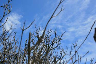 tree branches of grampians 2 by egidiogaudi