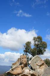 tree, rock and sky by egidiogaudi
