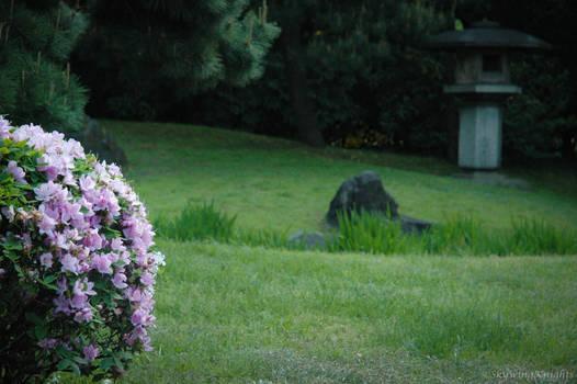 Japan: Just a Little Bloom