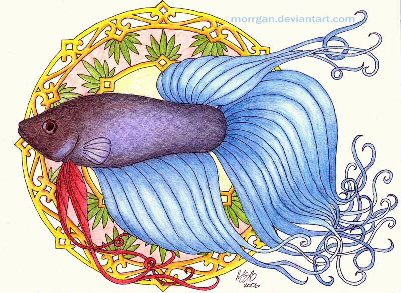 Betta Nouveau by Morrgan