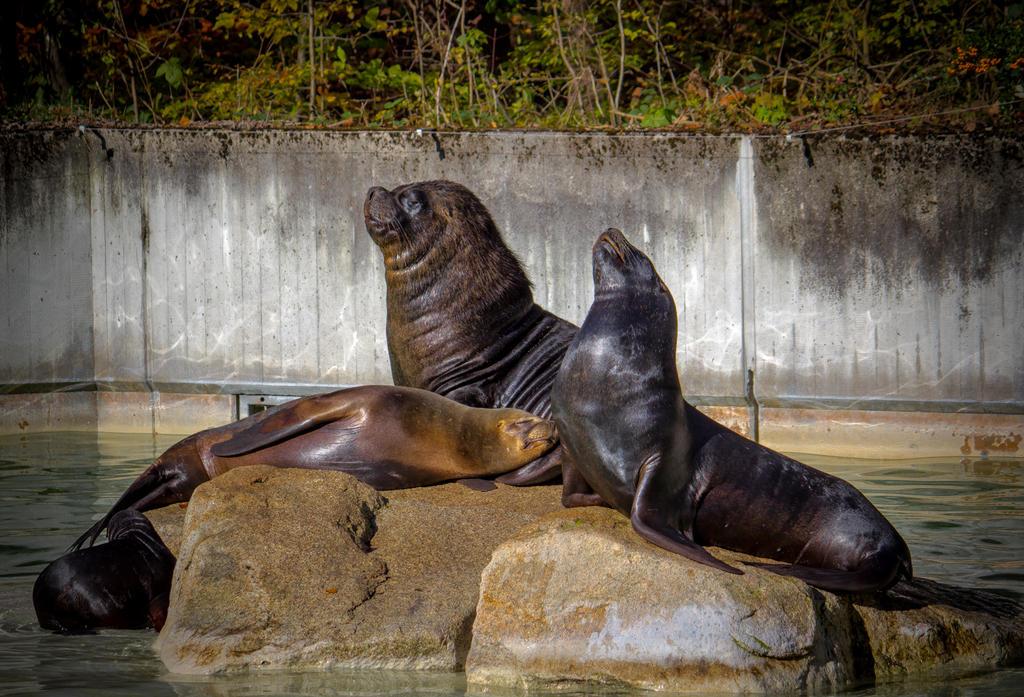 Sea Lion 09 by R4xx4r