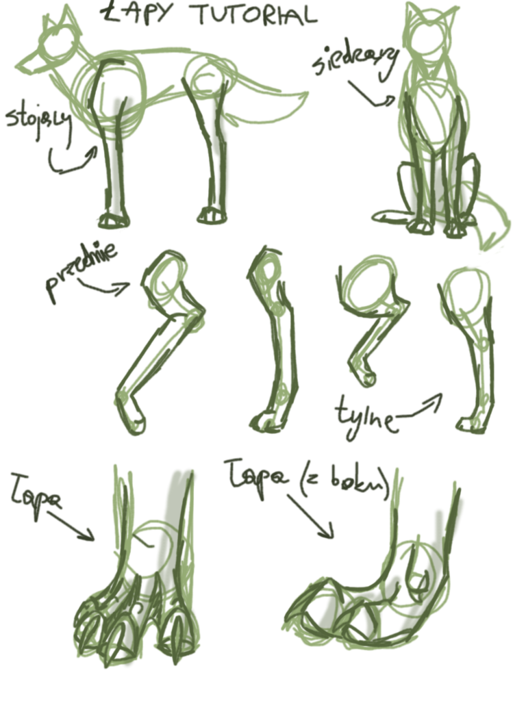 How To Draw Wolf Legs  Photo#15