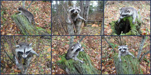 Raccoon Kit Softmount FINISHED