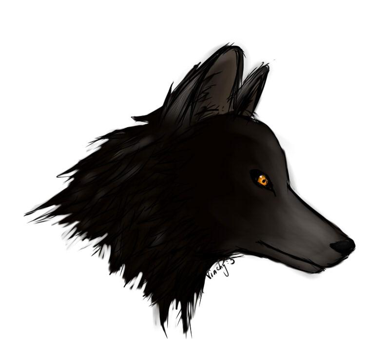 Wolf's head by VinchyNya