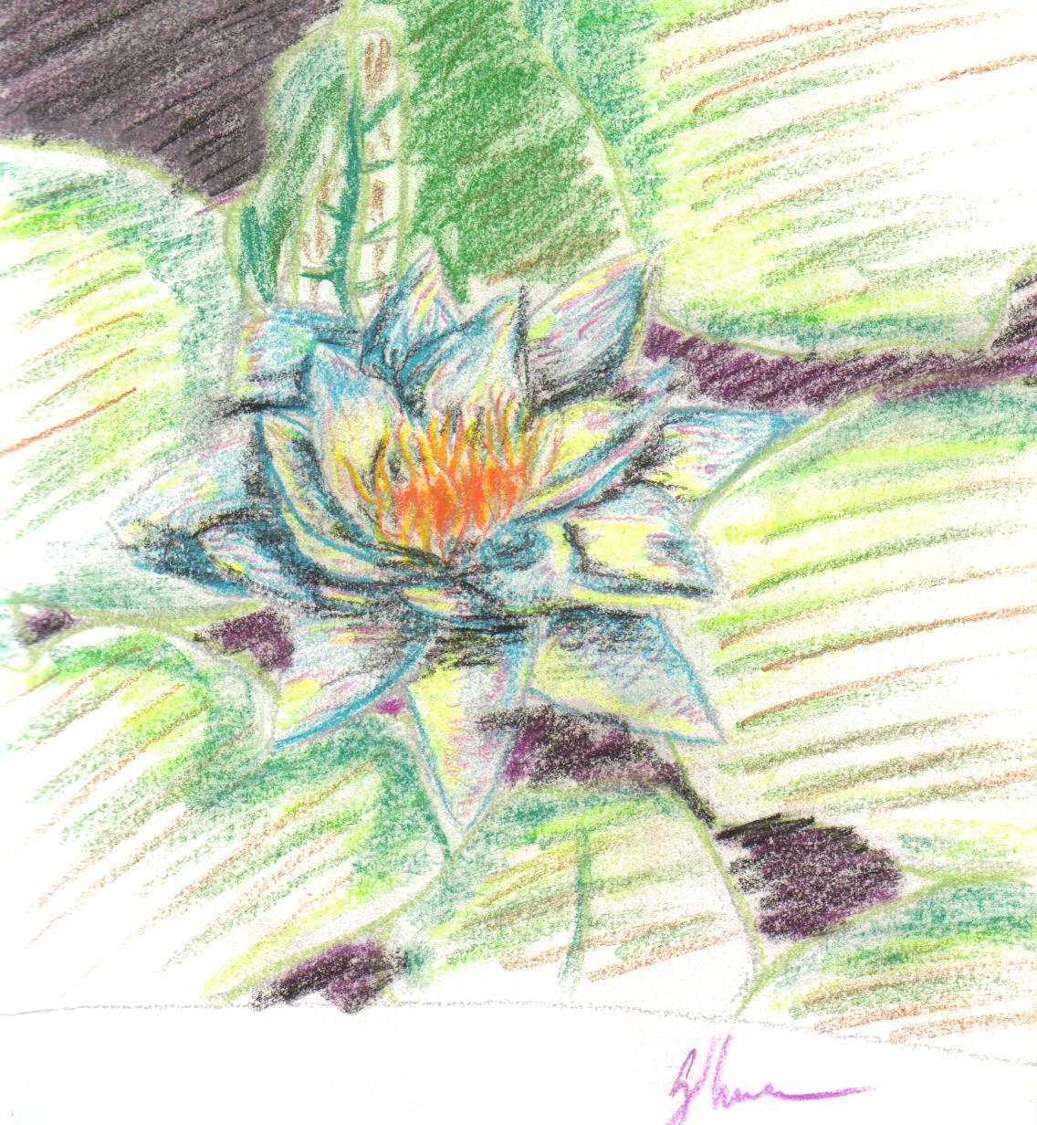 Lily flower by chotakana on