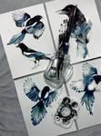 Magpie Birds