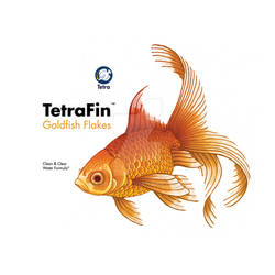 TetraFin_Product Redesign