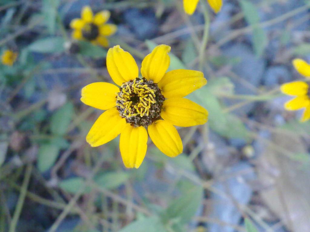 Little Flower by Lonergoer on deviantART