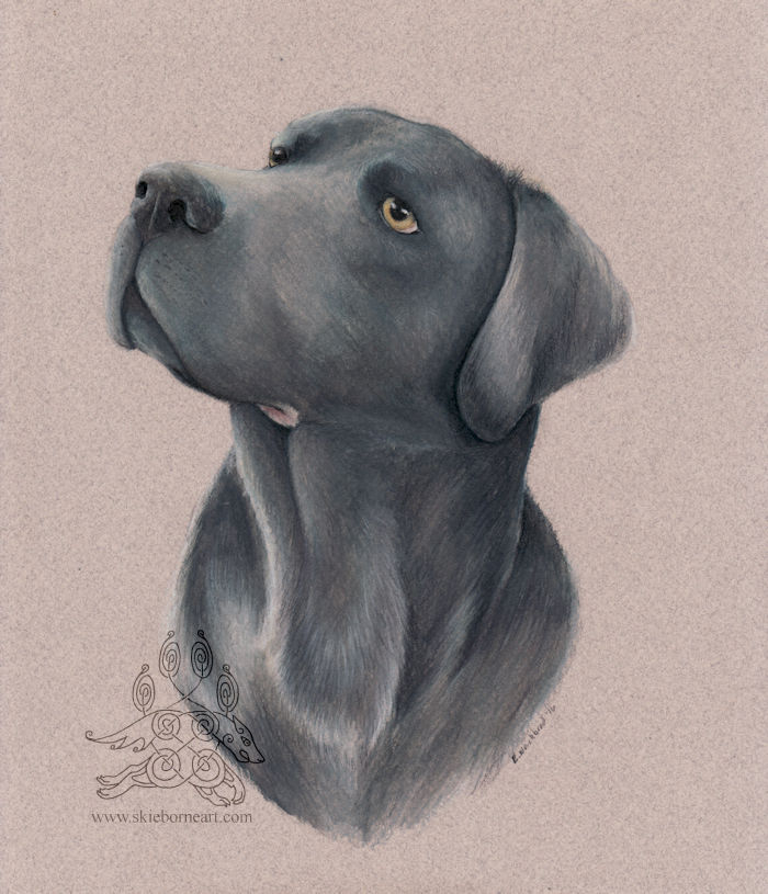 Charcoal Labrador by arikla