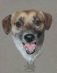 Cheddar - Pet Portrait