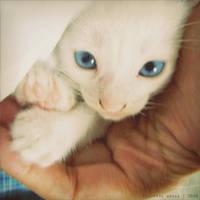 blue gaze by thresca