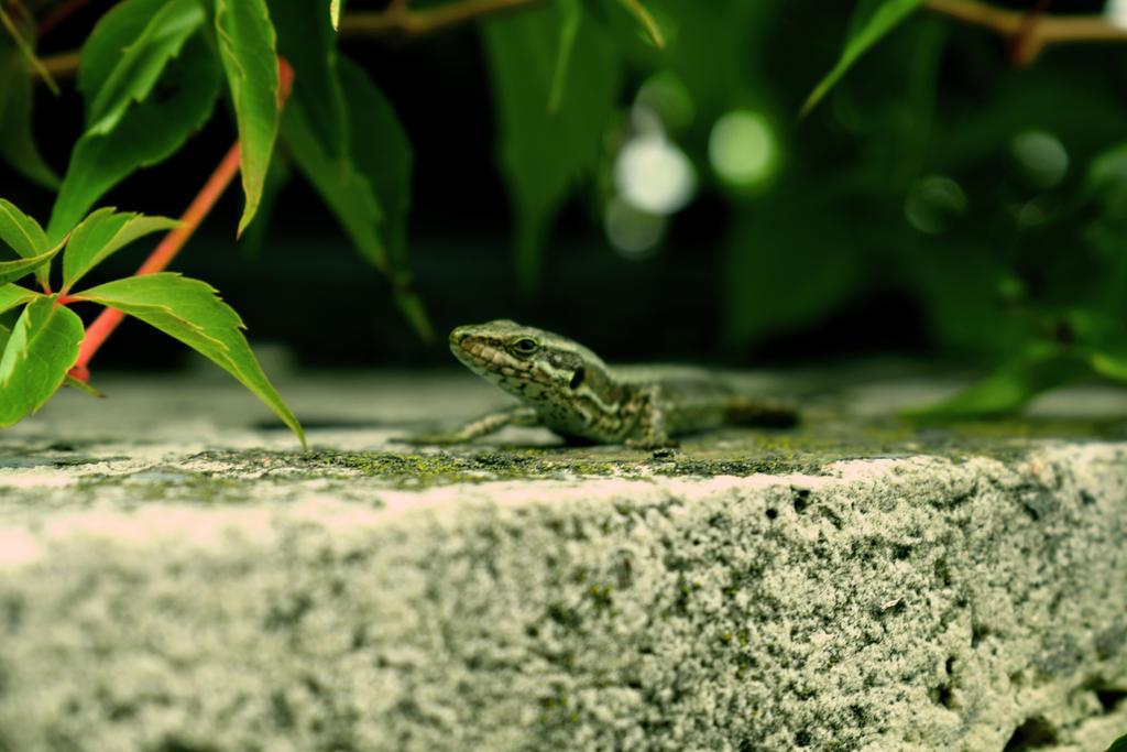 Little Lizard by Asezuna