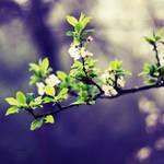 Flowers n' Leaves (1) by Smaragdi