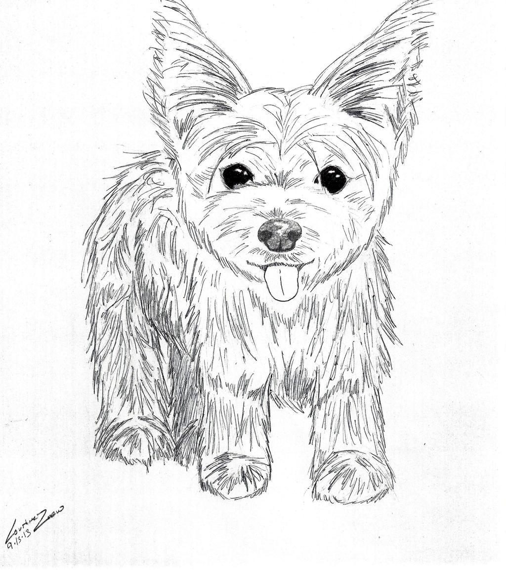 Line Drawing Of Yorkshire Terrier : Yorkshire terrier by thewolfnamedcc on deviantart