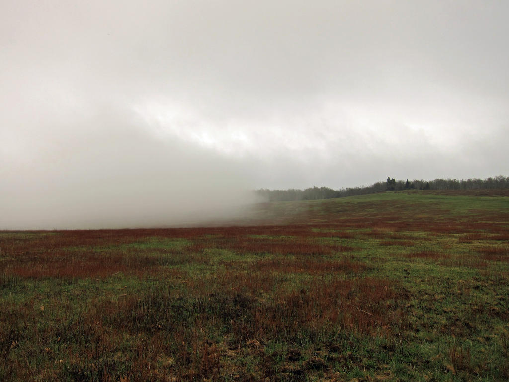 Fog Rolling Across Big Meadows by rdungan1918