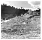 Mammoth Hot Springs, Yellowstone N.P. 8x8 print