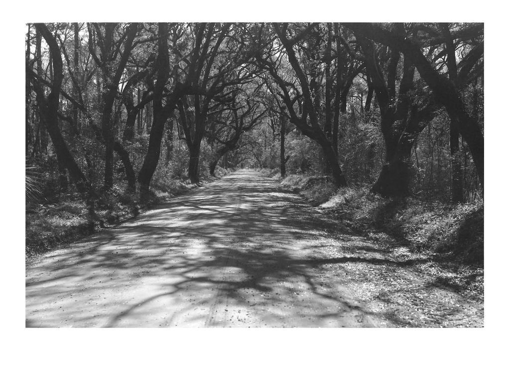 Botany Bay Road - print by rdungan1918