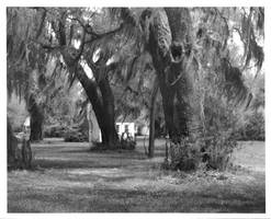 Depandency at the Grove Plantation 10x8 print