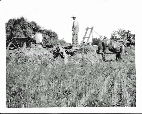 Loading Hay - 4x5 - vintage photo