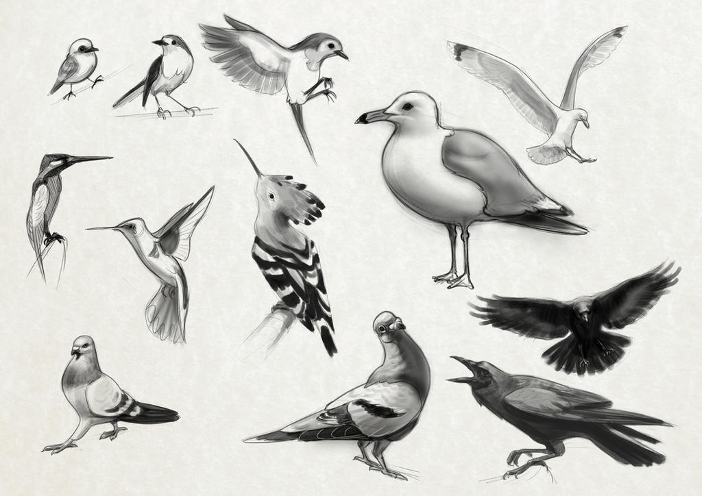 Bird Sketches by taralynna
