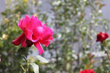 flower for u
