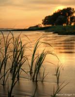 Grass in sunset by marschall196
