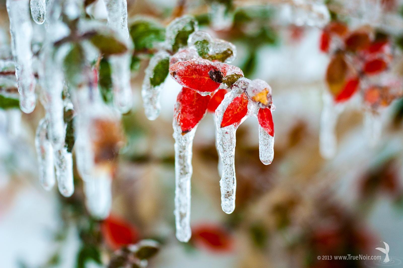 Frost glazed by NoirArt