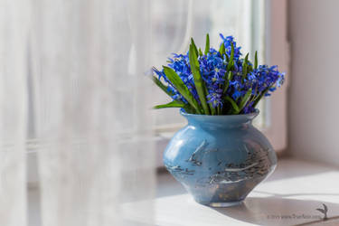 Squill bouquet on the window, still life photo