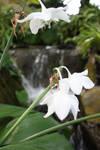 Drooping White Flower by alienjon