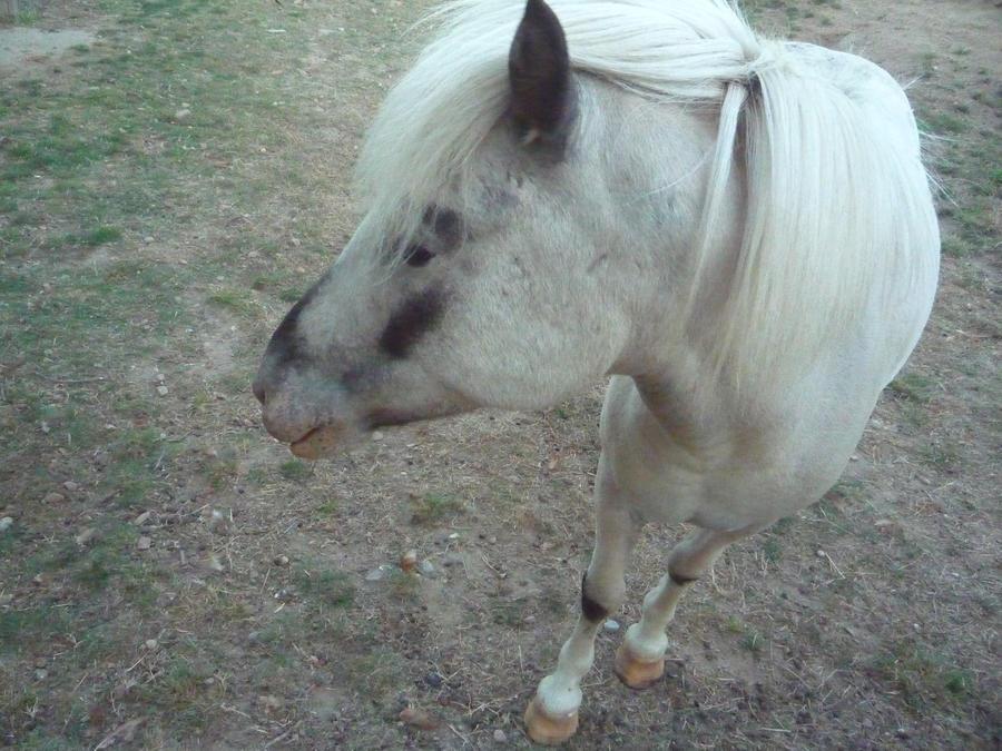 Pony by Lullabeyes