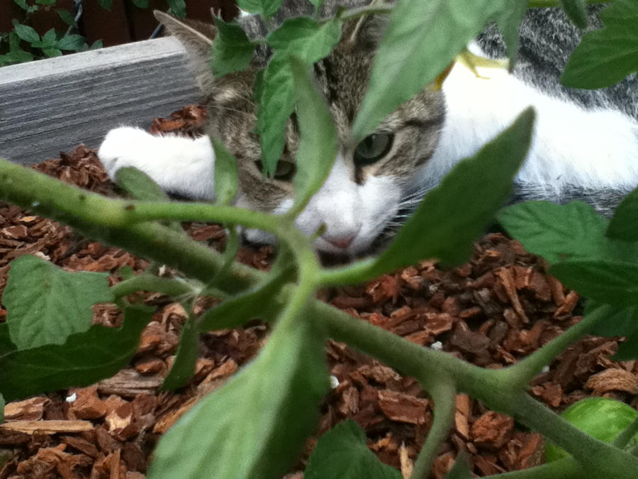 Tomato plant cat by Wildpath2701