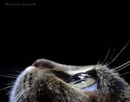 lovely cat by haftsin
