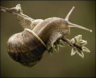 amazing snail by haftsin
